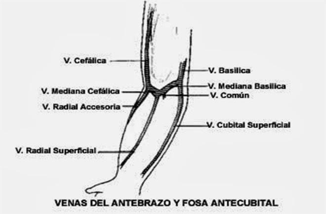 sitios-de-inyeccion-intravenosa-3